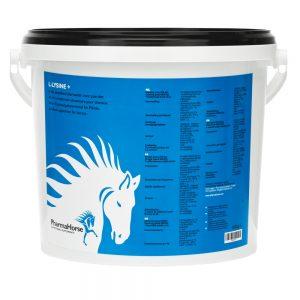 kôň, kone, výživový doplnok pre kone, výživové doplnky pre kone, výživový doplněk pro kone, výživové doplnky pro kone, lyzín, vitamín B, vitamín C, svaly, imunita, pohybová sústava, pohybový aparát, lyzín pre kone, vitamín B pre kone, vitamín C pre kone, svaly koní, imunita koní, pohybová sústava koní, pohybový aparát koní, lyzín pro kone, vitamin B pro kone, vitamin C pro kone, l-lyzín, l-lyzín pre kone, l-lyzín pri kone