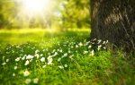 Alchýmia pastvín: 2. Pôda – zhutňovanie pôdy