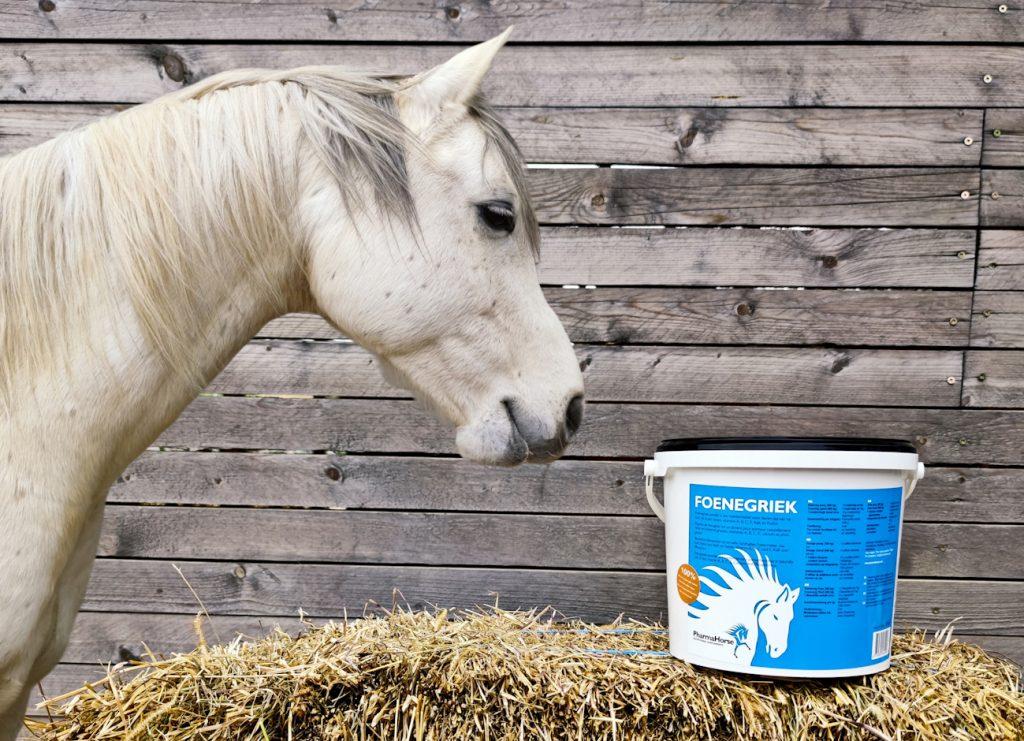 senovka grécka, senovka grécka pre kone, imunita, imunita koní, kašeľ, kašeľ koní, zníženie hladiny cukru, zníženie hladiny cukru u koní, obezita koní, tvorba materského mlieka, tvorba materského mlieka u kobýl, kašlání, kašlání u koní, snížení hladiny cukru, snížení hladiny cukru u koní, obezita koní, tvorba mateřského mléka, tvorba mateřského mléka u kobyl, bylinky, byliny, bylinky pre kone, byliny pre kone, bylinky pro kone, byliny pro kone