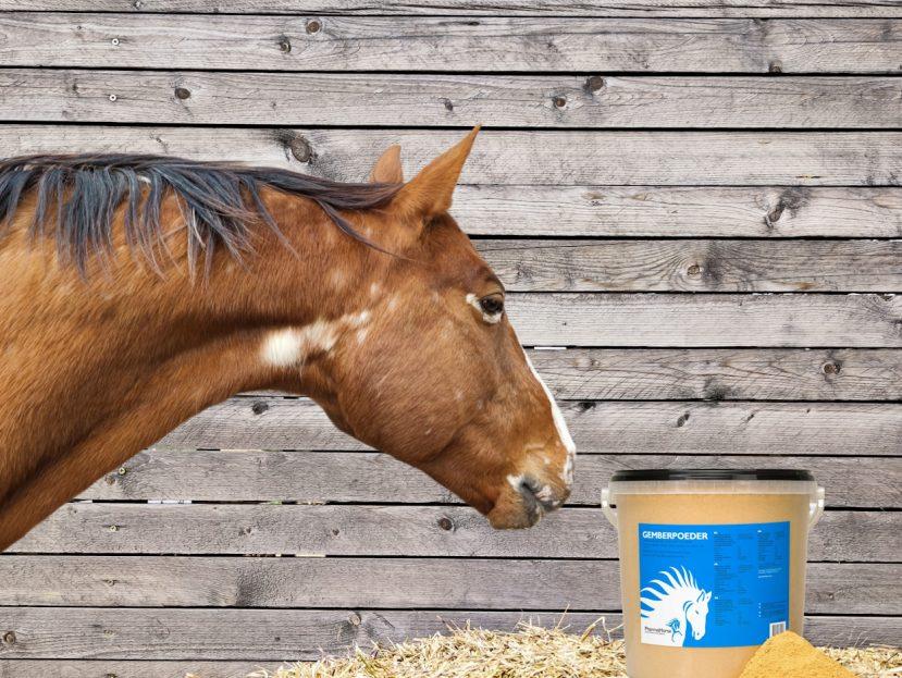 zázvor, zázvor pre kone, trávenie, trávenie koní, nadúvanie, nadúvanie u koní, zahrievanie organizmu, zahrievanie organizmu koní, antibakteriálne účinky, antibakteriálne účinky u koní, protizápalové účinky, protizápalové účinky u koní, zažívání, zažívání koní, trávení, trávení koní, nadýmání, nadýmání koni, zahřátí organismu, zahřátí organismu koní, antibakteriální účinek, antibakteriální účinek u koní, protizánětlivý účinek, protizánětlivý účinek u koní, bylinky, byliny, bylinky pre kone, byliny pre kone, bylinky pro kone, byliny pro kone