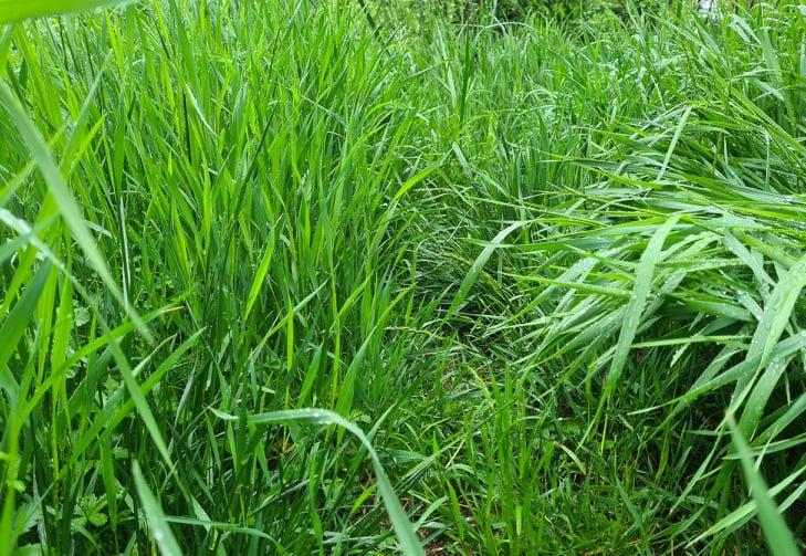 pastviny, alchýmia pastvin, výživová hodnota pastviny, NSC, vláknina, kedy pustiť kone na pastvinu