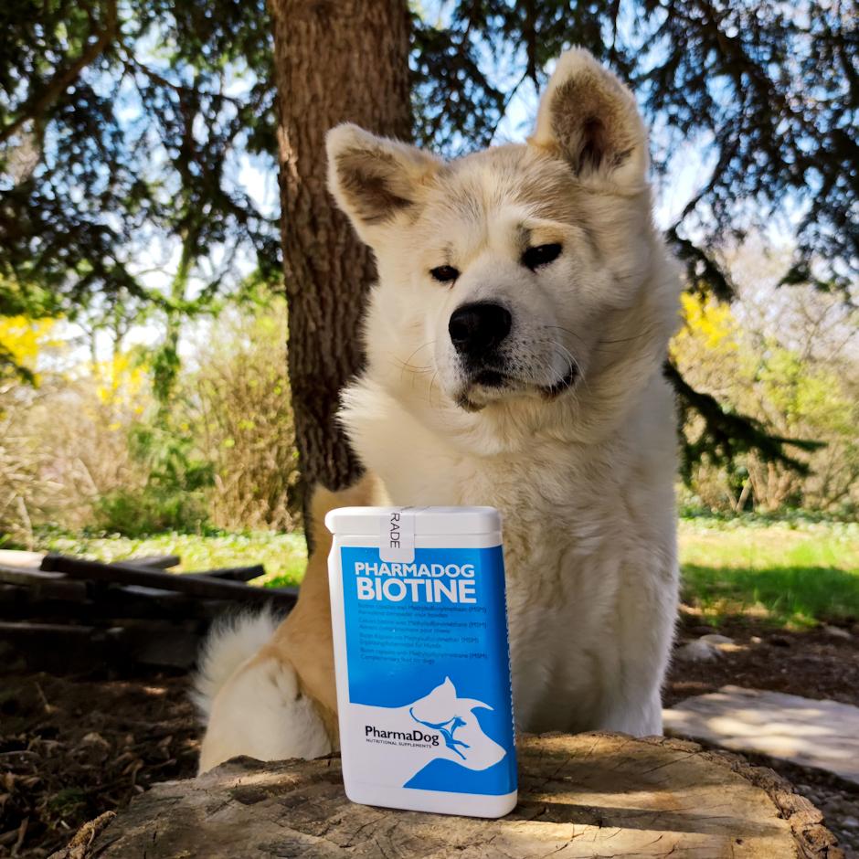 Sebadenitída / Seboceózna adenitída u psov