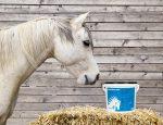 Je kurkuma vhodná pre vášho koňa?