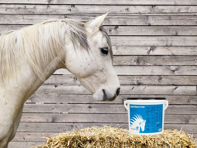 pharmahorse, kôň, kone, kun, elektrolyty pre kone, potenie koní, strata elektrolytov u koní, dehydratácia koní, zvýšený fyzická námaha koní, vytrvalosť koní, endurance, tréning koní, záťaž koní, kolika u koní, únava koní, svalová slabosť koní, svalové kŕče u koní, búšenie srdca u koní, sodík pre kone, chlorid pre kone, draslík pre kone, vápnik pre kone, horčík pre kone, magnézium pre kone, stopové minerály pre kone, regulácia tekutín koní, elektrolyty pro kone, pocení koní, strata elektrolytu u koní, dehydratace koní, zátež koní, svalová slabost u koní, svalové křeče u koní, bušní srdce u koní, sodík pro kone, chlorid pro kone, draslík pro kone, vápnik pro kone, hořčík pro kone, magnezium pro kone, reguláce tekutín koní, výživové doplnky pre kone, výživový doplnok pre kone, výživový doplněk pro kone