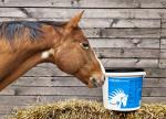 Informácie k sedlám Marjoman a meranie koňa
