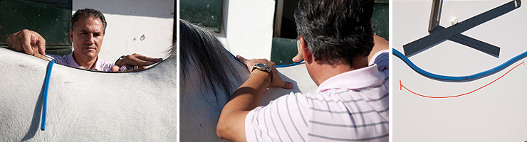 sedlo, pasovanie sedla, meranie koňa na sedlo