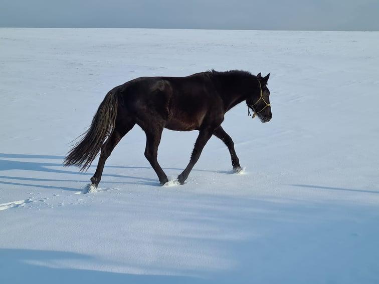 kone, kôň, imunita, imunita koní, výživové doplnky pre kone, výživové doplňky pro kone, bylinky pre kone, byliny pro kone