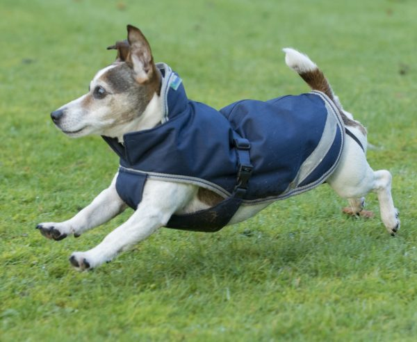 Kabát Freedom pre psov, bucas, nepremokavý kabát pre psov, nepremokavé oblečenie pre psov, kabát s ochranou brucha pre psov, oblečenie s ochranou brucha pre psov
