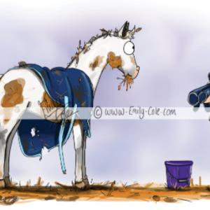 pohľadnica, pohľadnica so vzorom koňa, pohľadnica so vzorom koní, pohľadnica s motívom koňa, pohľadnica s motívom koní, pohľadnica s ilustárciou koňa, pohľadnica s ilustráciou koní, emily cole, pohľadnica Show ready