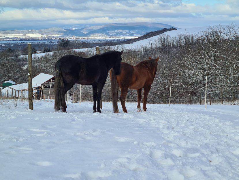 kone zime, kŕmenie koní v zime, vláknina pre kone, deky pre kone, imunita koní, kone a zima, kone a chlad, termoneutrálna zóna u koní, zimná deka pre kone, výbehová deka pre kone, kŕmenie koní, teplota koní