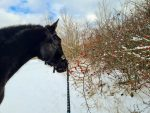 Alchýmia pastvín: 5. Vytvorenie pastviny – skôr, ako sa pustíte do práce