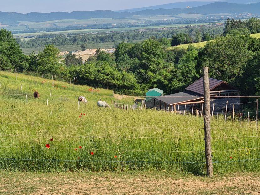 Pastviny, alchýmia pastvín, okonochsk, informácie o pastvinách, zakladanie pastviny, úprava pastviny, hospodárenie na pastvine, manažment pasenia