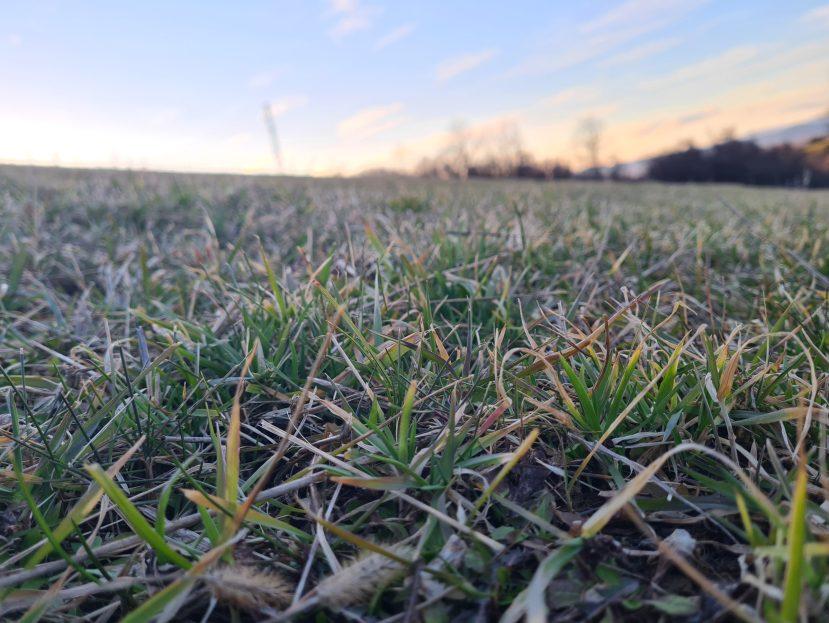 Pastviny, alchýmia pastvín, okonochsk, informácie o pastvinách, zakladanie pastviny, úprava pastviny, hospodárenie na pastvine, manažment pasenia, príprava pastviny, obmedzenia pastvín